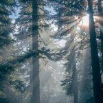 三大美林を覚えさせてみた。覚え方は・・・「アアキヨテオ」?